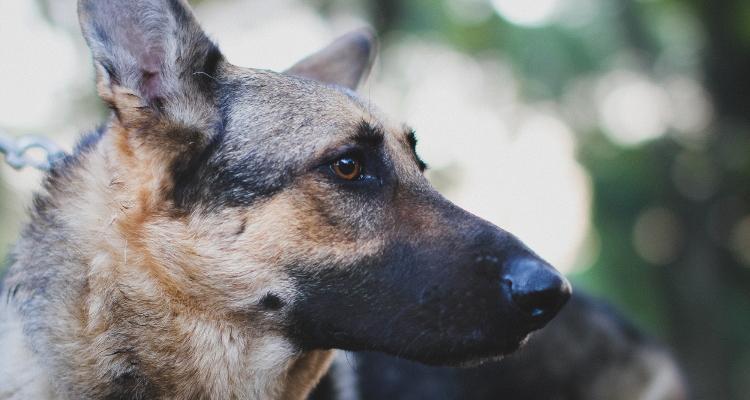 大型犬のしつけや飼い方は暮らし方で変わる