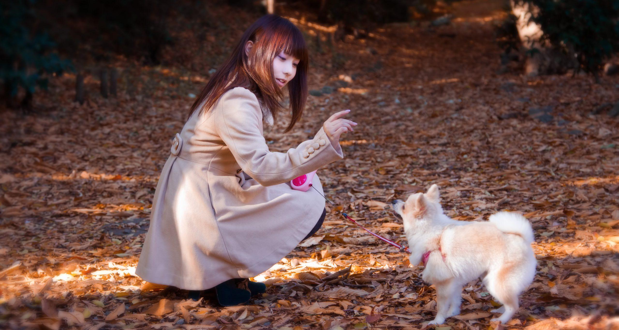 公園での散歩中にトレーニングレッスンができる